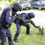 catswat (Feline SWAT Stops Terror Threat)