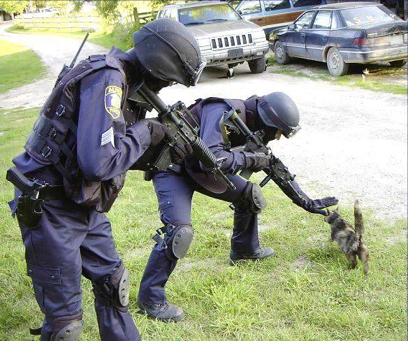 Feline SWAT