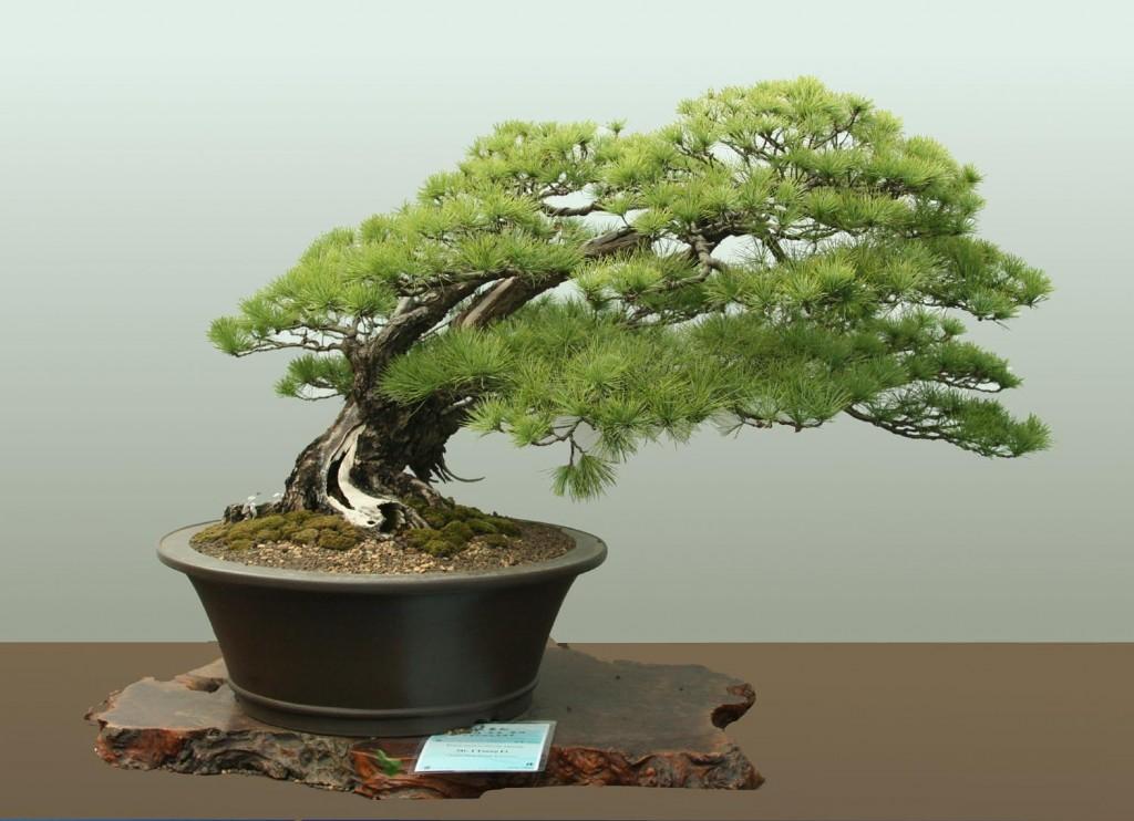 bonsai-tree-1aspac-wp-3-1024x742
