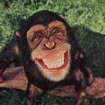funny-monkey-1 (The Lesson of the 5 Monkeys)