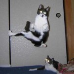 20060312-karate_cat (Pet KarateTraining.org Style!!)