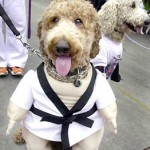 BIG DOG PARADE (Karate Dog?)